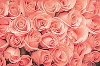 Фотообои флизелиновые 3D Цветы 375х250 см Нежные розы (MS-5-0133)
