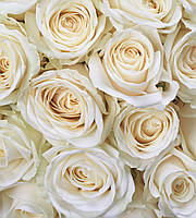 Фотообои флизелиновые 3D Цветы 225х250 см Белые розы (MS-3-0137, 8-314)