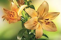 Фотообои флизелиновые 3D Цветы 375х250 см Желтые лилии (MS-5-0139)