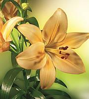 Фотообои флизелиновые 3D Цветы 225х250 см Желтые лилии (MS-3-0139)