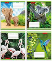 Набор тетрадей 5 штук Полиграфист Animals A5 в клетку 48 листов (48K 353)