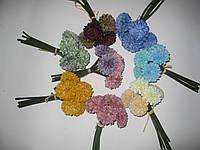 Хризантема пучок