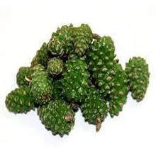 1кг., Соснові шишки зелені (заморожені), 1кг.