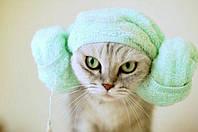 Косметика и уход за кошками