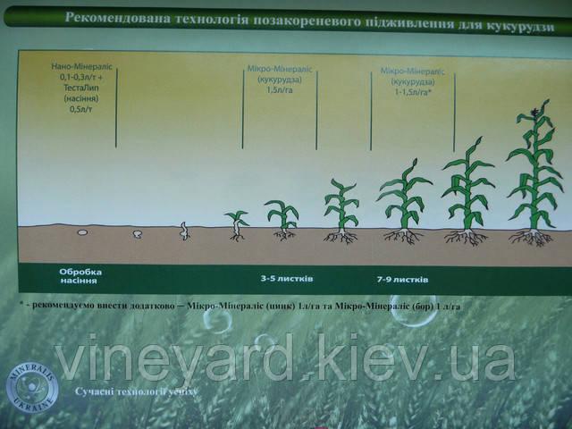 Система подкормки кукурузы от Минералис