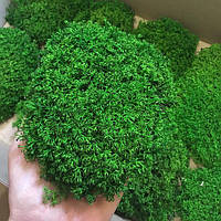Мох стабілізований (ягель), мох стабілізований для декору 1 кг