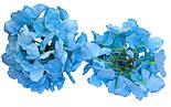 Головка гортензии голубая, 16 см, фото 3