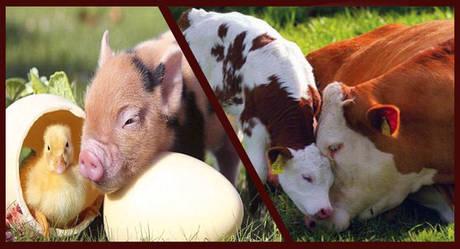 Высокобелковые Добавки в корма для животных