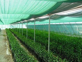 Затеняющая сетка 80 г/м², 3,0х50 м, HDPE.green