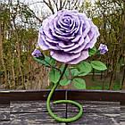 Ростовые, интерьерные цветы, фото 6
