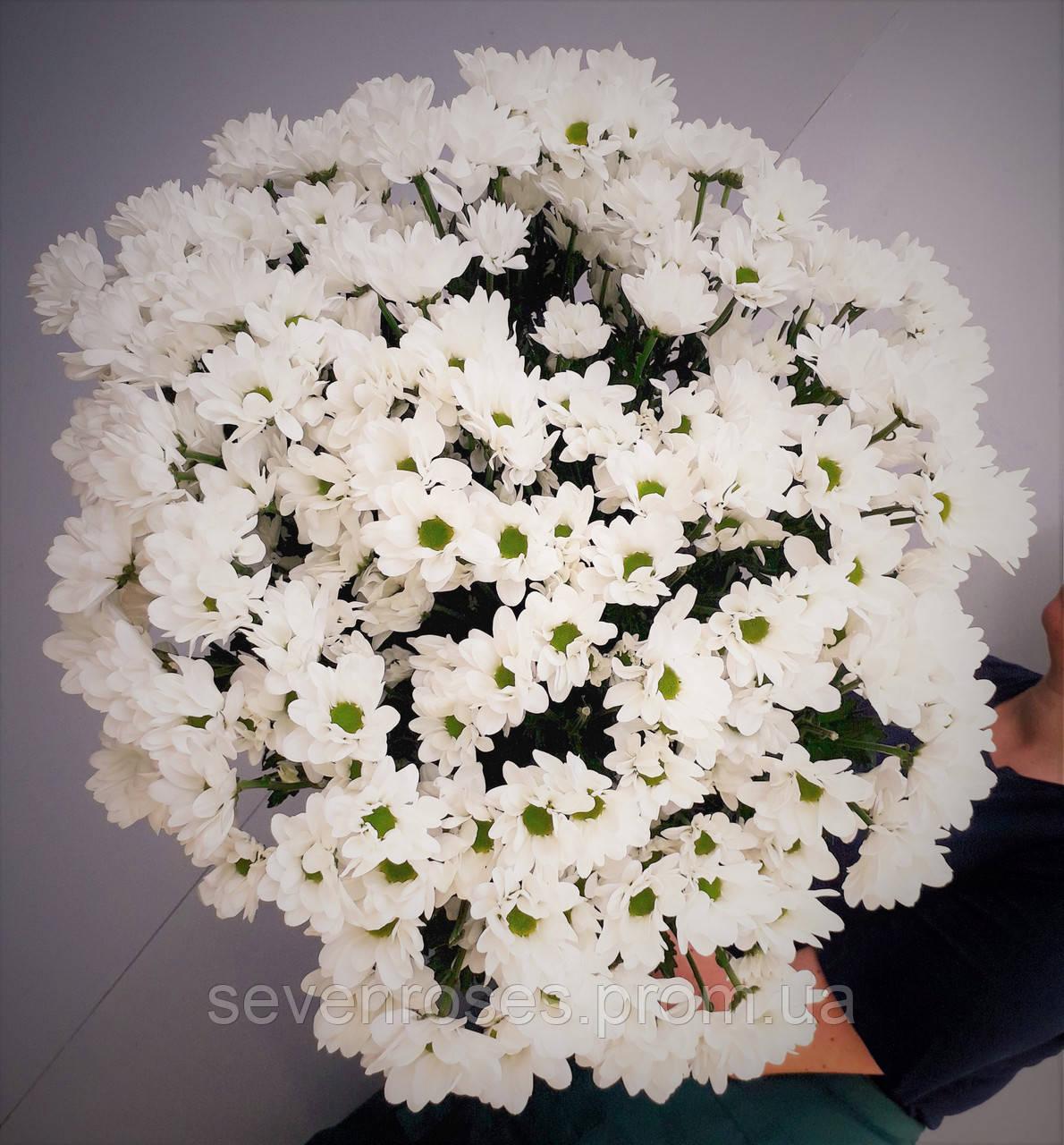 Букет из 20 Хризантем белая ромашка
