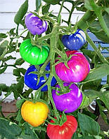Семена помидоров для сада! Семена необычных томатов! Упаковка 100 шт.
