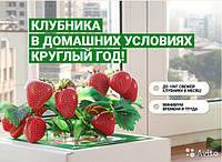 Домашняя грядка Чудо-ягодница Сказочный сбор — для выращивания клубники Альбион в домашних условиях