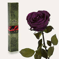 Долгосвежая роза Фиолетовый Аметист 7 карат (на коротком стебле)