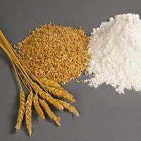 Пшеничная клетчатка пищевая добавка эмульгатор