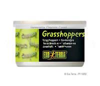 Корм для рептилий Кузнечики Hagen Exo Terra Grasshoppers (Хаген)