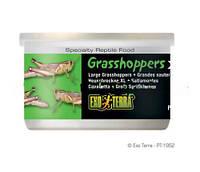 Корм для рептилий Кузнечики XL большие Hagen Exo Terra Grasshoppers (Хаген)