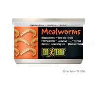 Корм для рептилий Хрущак мучной Hagen Exo Terra Mealworms (Хаген)