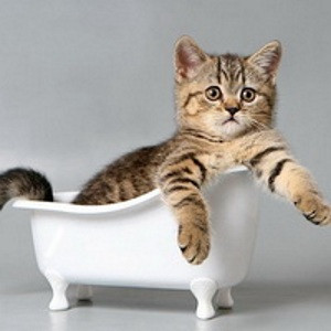 Шампуни, кондиционеры, спреи для кошек