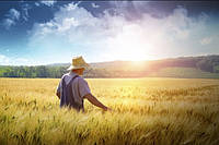 Количество украинских фермеров сократилось