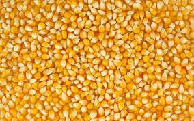 Куплю кукурудзу по хороших цінах