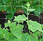 Сетка шпалерная огуречная: тренд современных садоводов и дачников