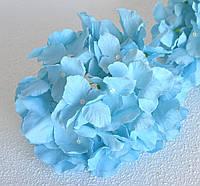 Гортензія головка бірюзово-велика блакитна