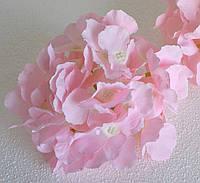Гортензія ніжна рожева