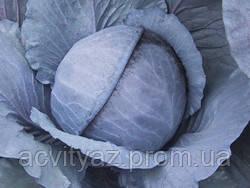 Семена капусты синей ПРЕМЬЕР F1 / Primero F1, 2500 семян