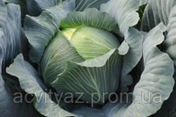 Семена капусты Байонет F1 / Bajonet F1, 2500 семян