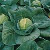 Семена капусты Харрикейн F1 / Hurricane F1, 2500 семян