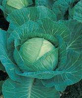 Семена капусты Мегатон F1 / Megaton F1, 2500 семян