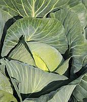 Семена капусты Амтрак F1 / Amtrak F1, 2500 семян