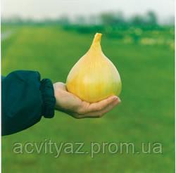 Семена Лук Ексибишн / Exhibition, 250 тыс. семян
