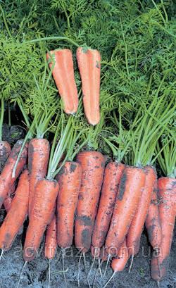 Насіння Моркви Канада F1 / Canada F1, (1, 6-1, 8 мм), 25 тис. насінин