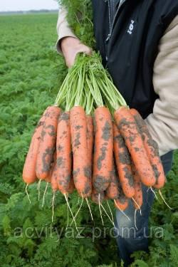 Семена Морковь Нарбонны F1 / Narbonne F1, (2, 2-2, 4 мм), 1 млн. семян