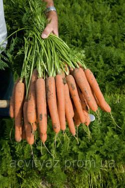 Семена Морковь Нерак F1 / Nerac F1, (1, 8-2, 0 мм), 1 млн. семян