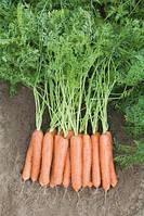 Семена Морковь Ньюкасл F1 / Newcastle F1 NEW!, (2, 0-2, 2 мм), 1 млн. семян