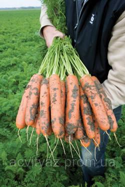 Семена Морковь Балтимор F1 / Baltimore F1, (1, 8-2, 0 мм), 1 млн. семян