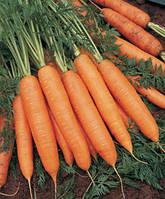 Семена Морковь Бангор F1 / Bangor F1, (2, 2-2, 4 мм), 1 млн. семян