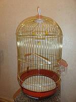 Клетка золотая круглая для попугаев, канареек, амадин.Размеры H-53,d-33см.