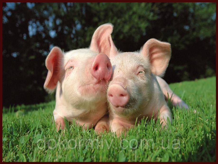 БМВД для свиней откорм 15% (кормовая добавка)
