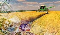 За п'ять місяців в Україні оформили 991 аграрну розписку