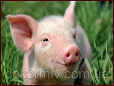 БМВД для свиней Финиш 15% (белково минеральная добавка в корм для роста)