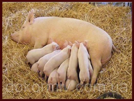 БМВД для свиноматок (кормовая добавка для лактирующих и супоростных)