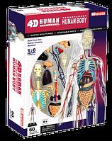 Объемный пазл анатомической модели 'Тело человека' (85075)