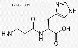 L- Карнозин
