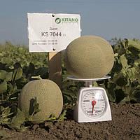Семена Дыня KS 7044 F1, 1000 семян Kitano Seeds
