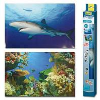 Фон для аквариума Tetra Shark&Coral 60х45 см