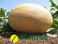 Семена Дыня Амал F1, 1000 семян Clause, фото 1